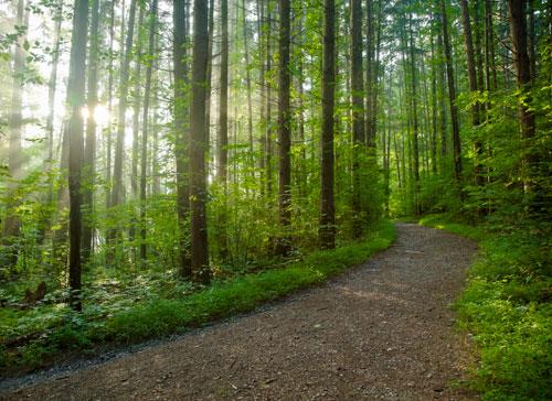 Start Your Journey | My Wellness Clinic | Milwaukee, WI